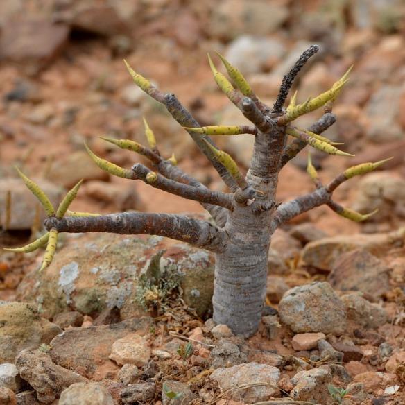 fig-tree-900316_960_720