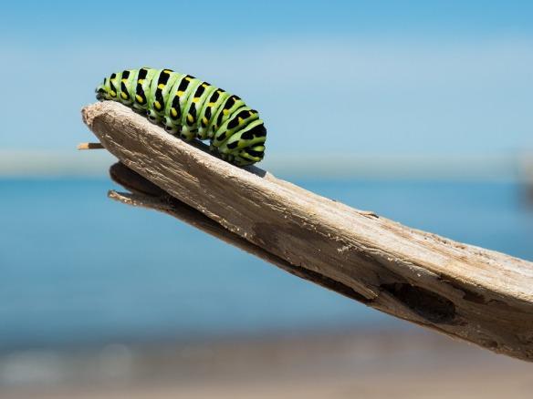 caterpillar-1209834_960_720