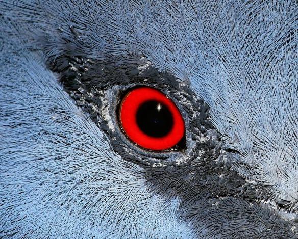 eye-788662_960_720