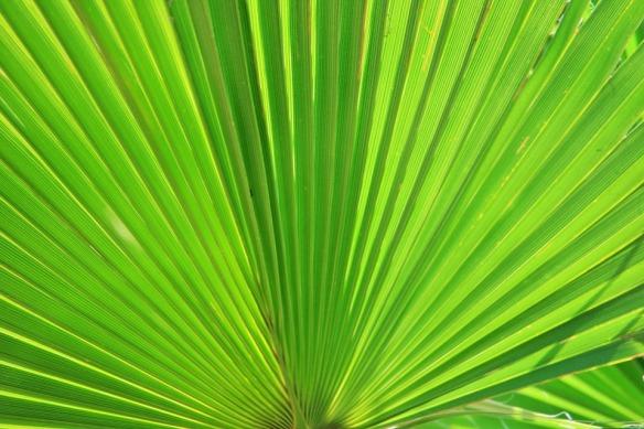 fan-palm-283152_960_720