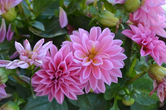 flowers-2096701_960_720