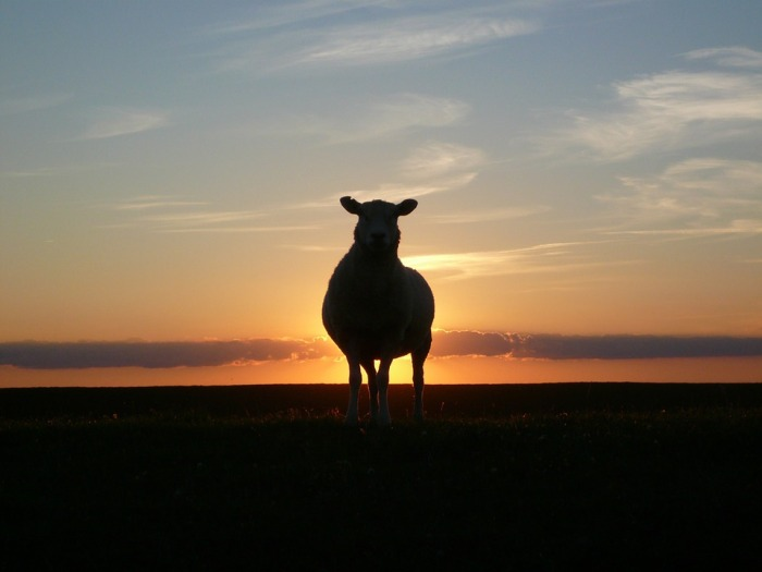 sunset-50494_960_720