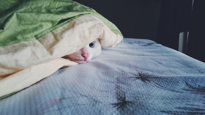 kitty-1785031_960_720