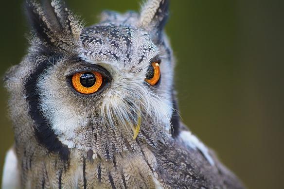 owl-1705112_1280