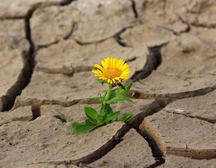 flower-887443_1280