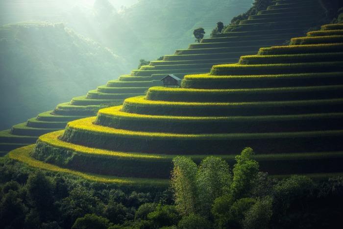 rice-plantation-1822444_1280